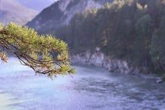 分行杉木 3个hdr图象山全景河垂直 美好的横向 库存图片