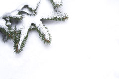 分行框架杉木雪 免版税图库摄影