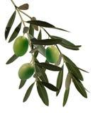 分行橄榄 库存照片