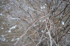 分行灌木冷冻结的冬天 图库摄影