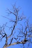 分行结构树 免版税图库摄影