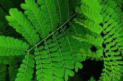 分行绿色叶子 免版税库存照片
