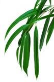 分行绿色叶子 图库摄影