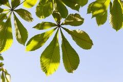 分行绿色留给树苗结构树 库存图片