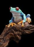 分行被注视的青蛙红色结构树 库存照片