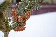 分行锥体复制冷杉左空间结构树 背景蓝色雪花白色冬天 库存图片