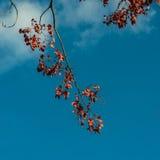 分行离开红色结构树 免版税库存图片