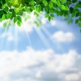 分行绿色没人河岸天空夏天 免版税库存照片