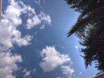 分行绿色没人河岸天空夏天 免版税库存图片