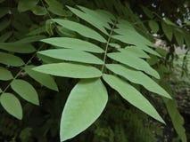 分行绿色留给树苗结构树 免版税图库摄影