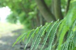 分行绿色留给树苗结构树 免版税库存图片