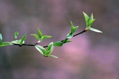 分行绿色结构树 免版税库存照片