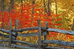 分裂在秋天颜色的栅栏在Smokies 图库摄影