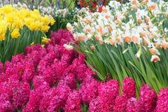 分配为花坛的区域 库存图片
