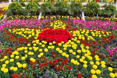 分配为花坛的区域 免版税图库摄影