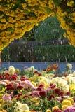 分配为花坛的区域 免版税库存照片