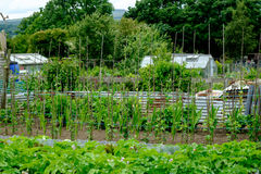 分配地段在英国,菜园 免版税库存图片