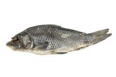 分配的干鱼 库存图片