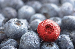 分集 新鲜的湿蓝莓和一个红色莓果在背景中 库存图片
