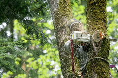 切割工结构树 库存照片