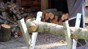 切口与锯的桦树木头 影视素材