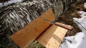 切口从桦树的白桦树皮 库存图片