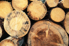 切好的木头 免版税库存图片