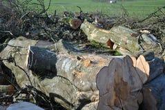 切好的木材 免版税图库摄影