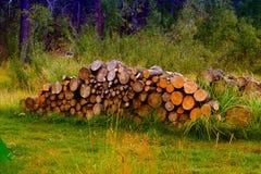 切好的森林 免版税图库摄影