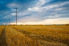 切好的麦子,黄色干草 免版税库存图片