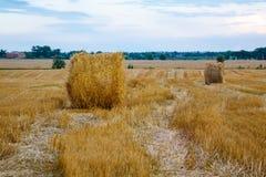 切好的麦子,黄色干草 免版税库存照片