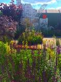 切尔西花展的一个展示庭院 库存照片