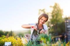 切开一点花植物,绿色晴朗的自然的年轻花匠 库存图片