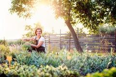 切开一点花植物,绿色晴朗的自然的年轻花匠 库存照片