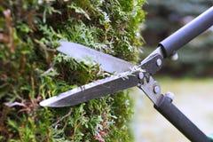 切开与园艺剪刀的树篱 库存照片