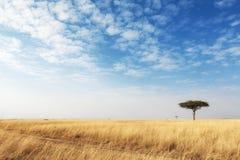切开在开放肯尼亚领域的草路 免版税库存图片