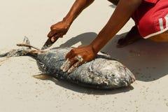 切开在海滩的人新鲜的金枪鱼 免版税库存照片