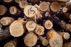 切开杉木 被编号的采伐 在裁减杉木的年轮 日志看见了 免版税库存照片