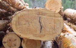 切开杉木 被编号的采伐 在裁减杉木的年轮 免版税图库摄影