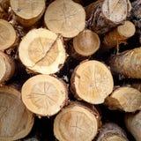 切开杉木 记录 在裁减杉木的年轮 免版税图库摄影