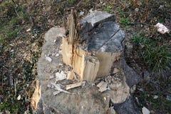 切开树桩 库存图片