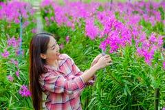 切开桃红色兰花的妇女在庭院里 免版税库存照片