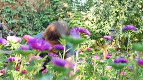 切开紫色或紫罗兰色michaelmas雏菊或翠菊花的卖花人 股票视频