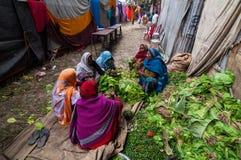 切开菜的农村印地安妇女 库存照片