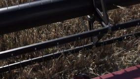 切开黑麦关闭的工业联合收割机刀片在领域 影视素材