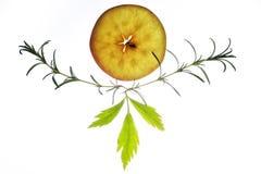 切片与迷迭香和芹菜叶子的苹果 图库摄影