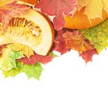 切片在槭树叶子的橙色南瓜 免版税图库摄影