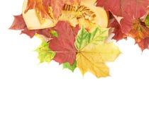 切片在槭树叶子的橙色南瓜 免版税库存照片