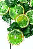 切片在白色背景的绿色柑橘 免版税库存照片