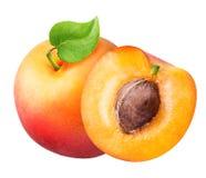 切片在白色背景被隔绝隔绝的杏子集合 免版税图库摄影